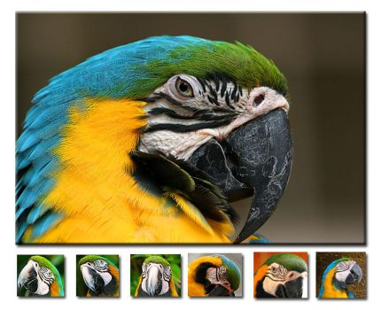 Photo  - Parrots II by emailandthings