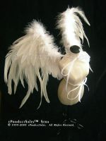 Sera Angel Wings eproductsales by eProductSales