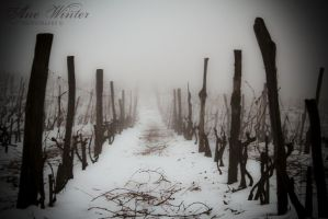 Vineyard in winter by neith13
