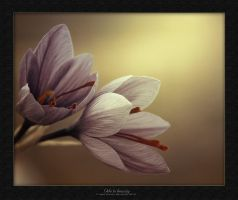Ode to beauty by hydrocean
