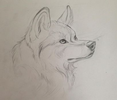 Wolf Tattoo Drawing by Lucky978