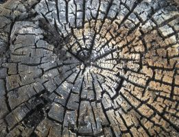 Stock Texture - Charred Wood Stump II by rockgem