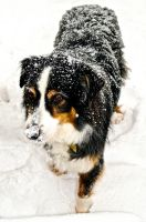 Pooch in the Snow by Lambieb123
