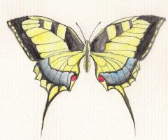 Machaon by Ombreuse