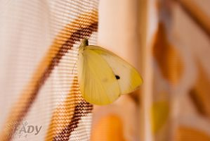 Butterfly in my room by Raneem90