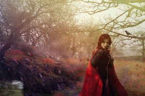 Forest by siseer