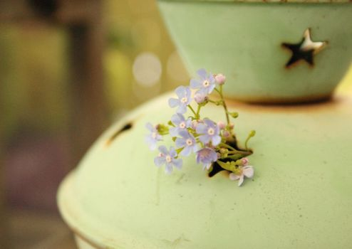 blue flowers by frimmi