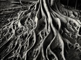 Root System by arnaudperret