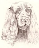 Sussex Spaniel Sketch by TheRoyalFrog
