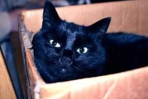 Cat...In A Box by carrie-warwick