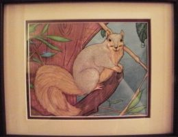 Squirrel - Gift for Mom by jacquelynfisher