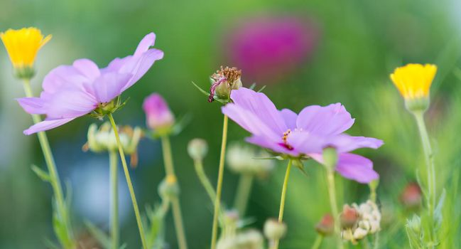 Flowers in my Garden with the Nikon 135 mm f 2 DC by sandor99