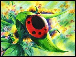 Lady bird in colour pencil by a6-k