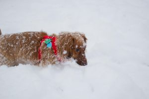 snow weiner by pringle753