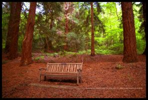 Bench by Hitomii