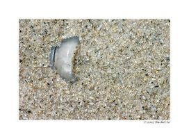 Sea Glass by butterfly36rs