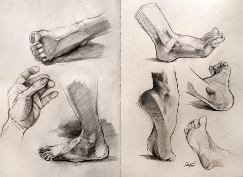 Anatomy Foot Studies 2014 by yolque