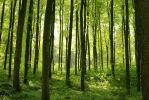 Spring Forest by Jantiff-Stocks
