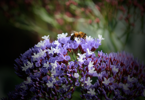 A buzzzz in time by Inkovic