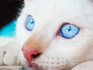 Catito, Blue Eyes by RBenedetti