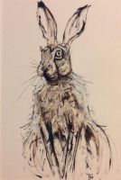 'Irish Hare' by BenjaminGart