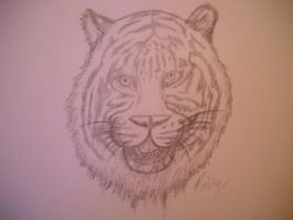 Tiger WIP by DaggarHeart