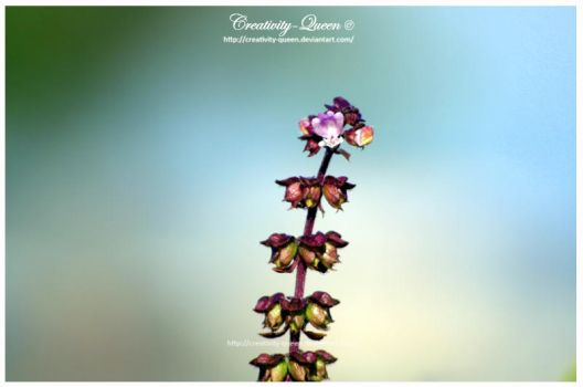 .Dancing with the wind. II by Creativity-Queen
