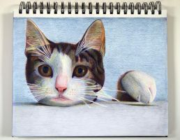 Cat drawing by Rollingboxes