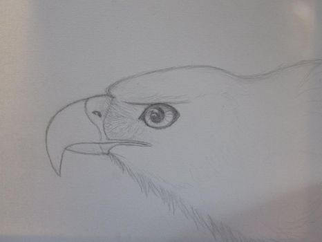 Golden Eagle Step 1 by akyta680