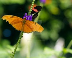 Butterfly_8713 by creative1978