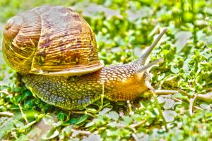 Snail HDR 2 by SomeoneNamedTom