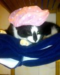 cat with bathing cap by cibby7