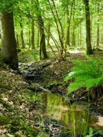 Woodland spring near Winchester by SpiritOfOld