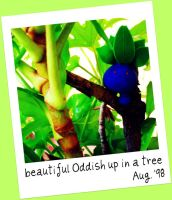 beautiful Oddish up in a tree by 0----0