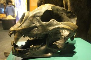 Short-faced Bear skull by Daikaiju-fanboy