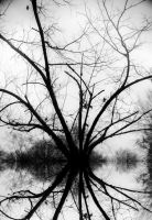 Crazzy Branches reflection by RobertRobledo