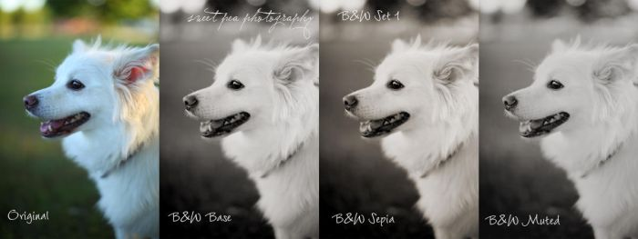 B and W Action set 1 by SweetPeaPhototc