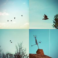 i like birds by ByLaauraa