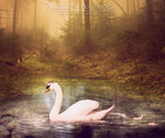 Swan Princess by Aurora-AE