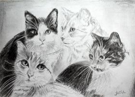 May cats by danuta50