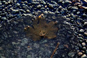 frozen leaf by Karina-the-Canon