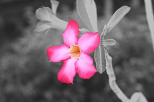 flower by lindaatje