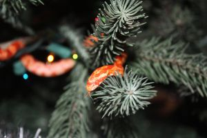 Corn Snake in the Christmas Tree by icantthinkofaname-09