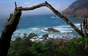 Ecola State Park (beach)- Oregon Coast by gantonski