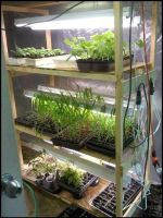 seedling stand with plants by iamfox