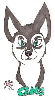 Canis headshot by NiehHuskey