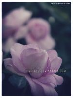 Vintage Flower - Psd by pincel3d