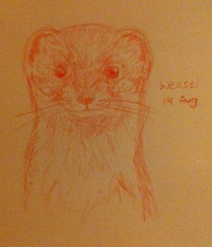 Weasel by sarahyt