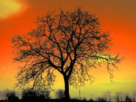 The perfect tree by nicolaperasso