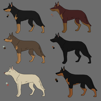 Kelpie Imports For a Good home by Alcemistnv